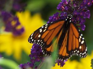 Landscape companies can help protect pollinators